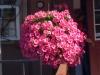 new_flowers_1