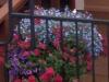 new_flowers_2